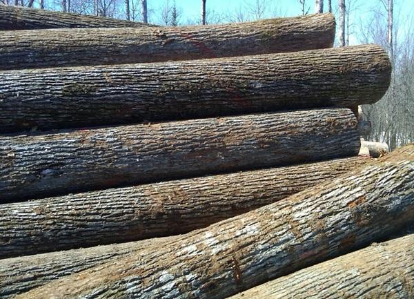Những loại gỗ gì được dùng để sản xuất rèm sáo gỗ