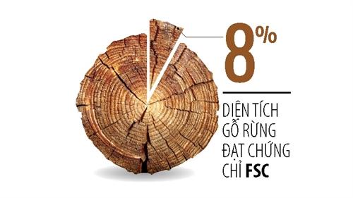Trung Quốc đóng cửa rừng, Việt Nam lo thiếu gỗ