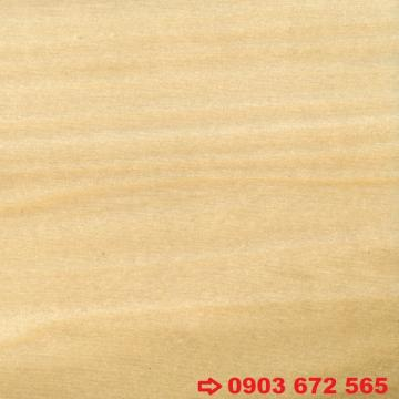 Gỗ Dương (Gỗ Poplar)